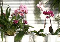 Orchideenfenster - Demonstration