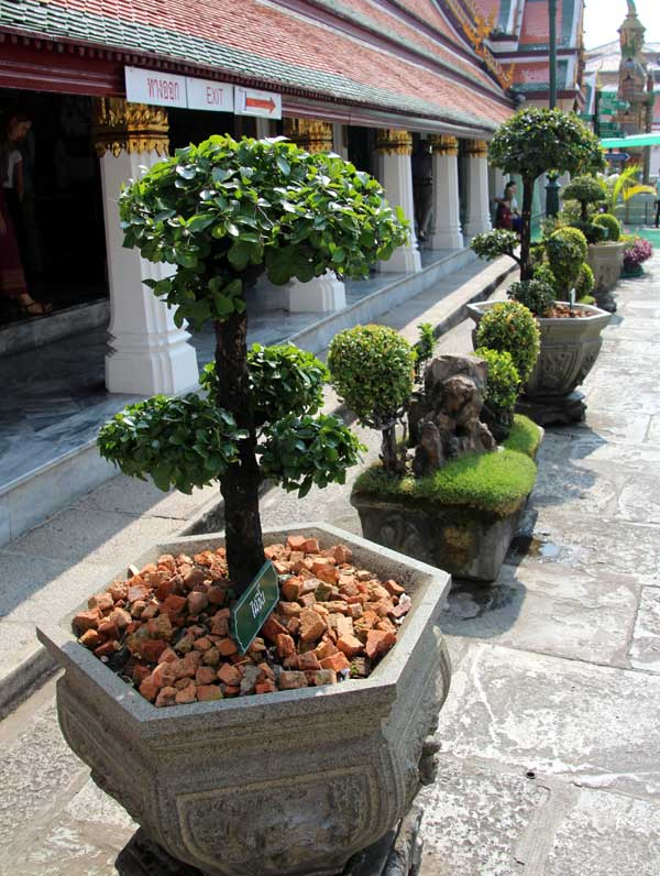 Bonsai in Topiari (Formschnitt)